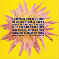 Flower bulb guide