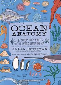 Ocean anatomy